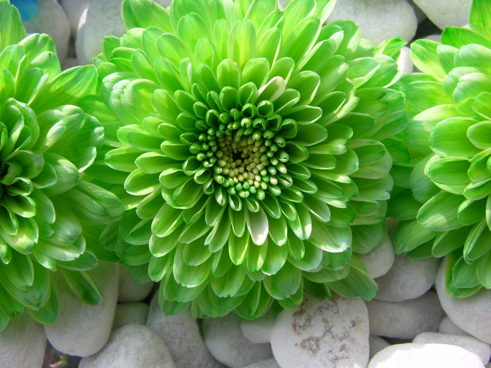 green flower wallpaperjpg 1600x1200