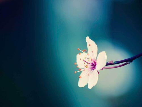 blue flower flowers nature spring 500x375