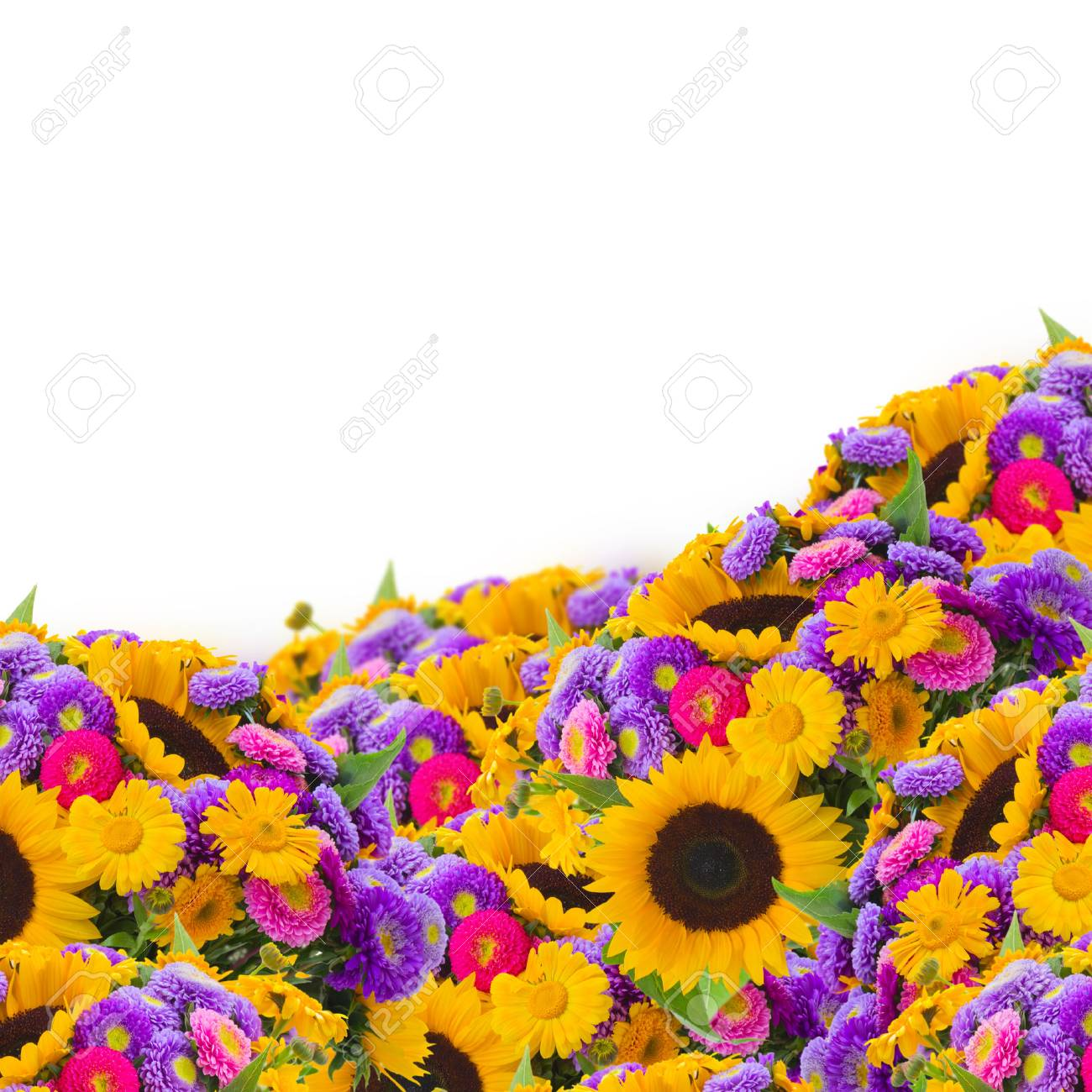 Colorful Field Of Sunflowers And Mums Isolated On White Background 1300x1300