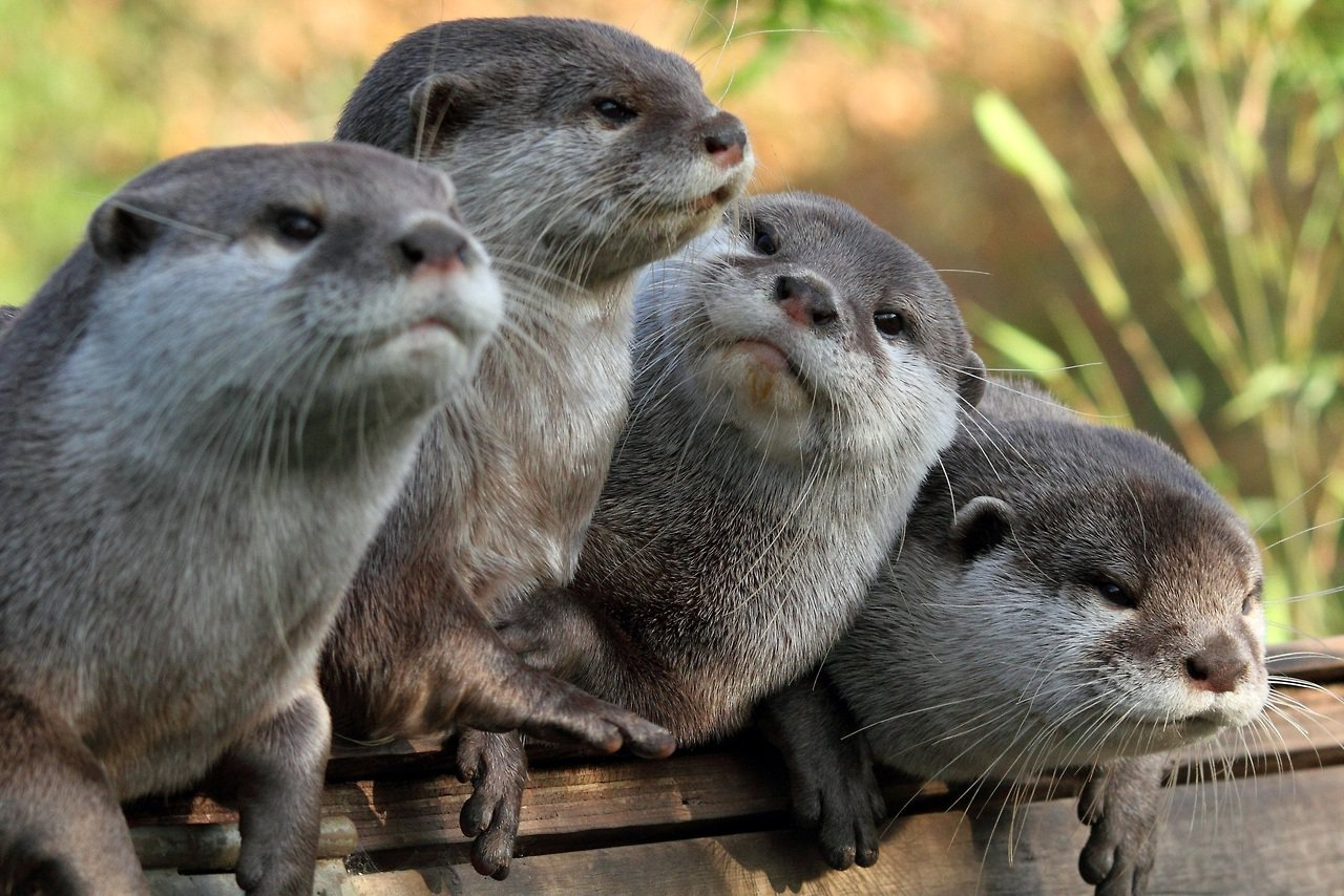 The Daily Cute Significant Otters 1280x854