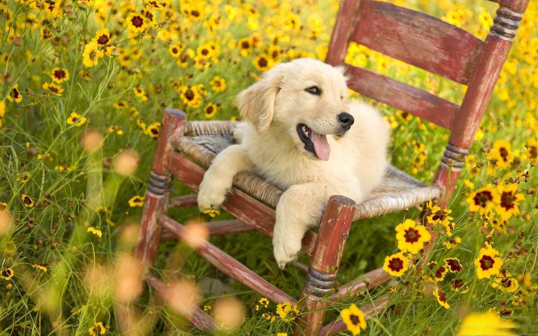 Dogs Puppy 1440x900