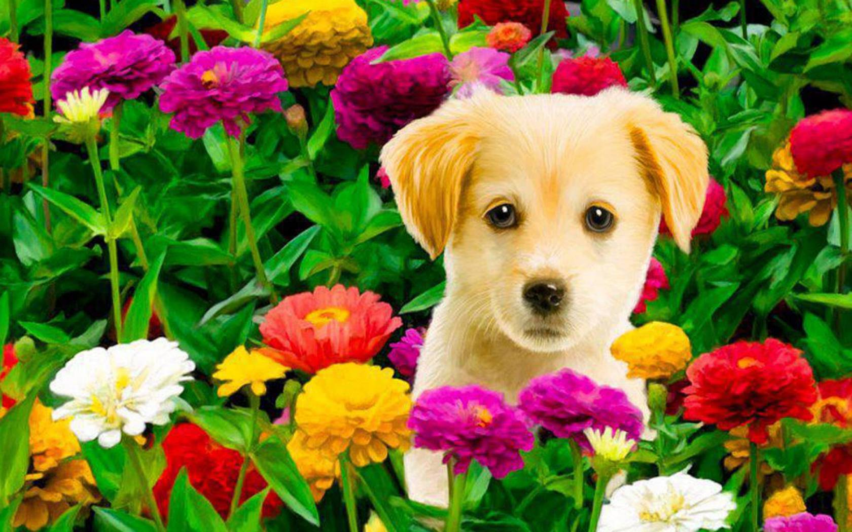 Dogs And Puppies Wallpaper Puppies in Flowers Com...