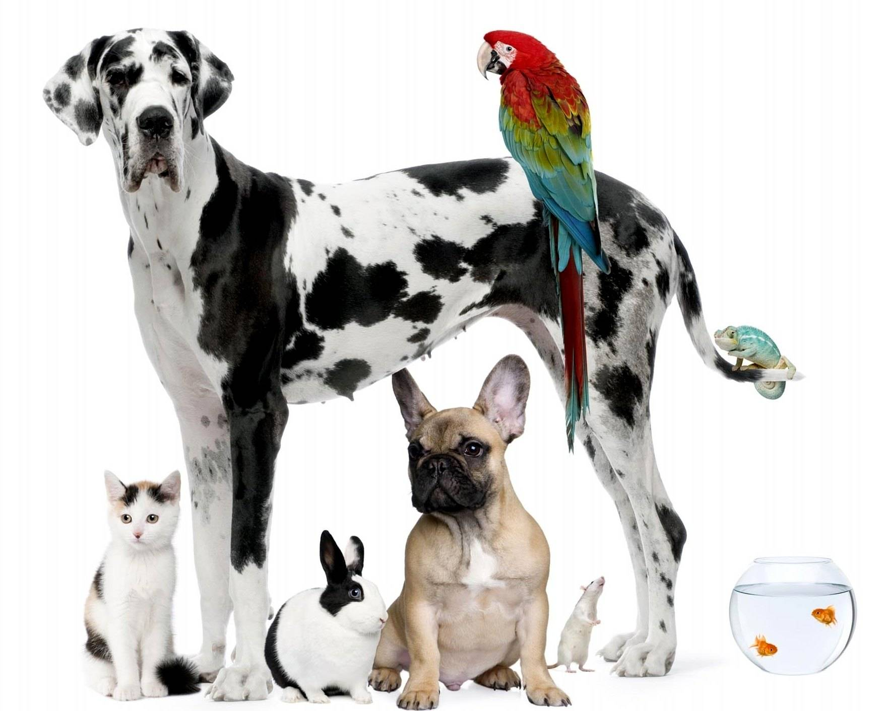 stuffpoint animals home pets images wallpapers background pic tweet 1758x1412