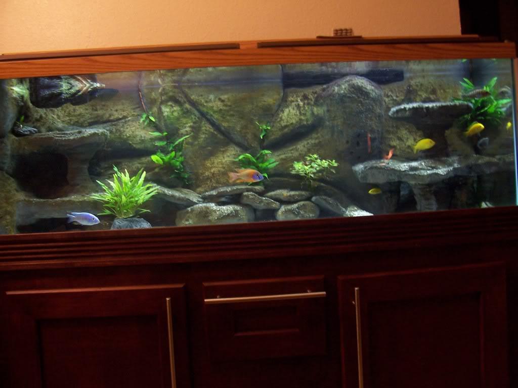 Free Download Bch Diy 3d Background Aquarium 1024x768 For Your Desktop Mobile Tablet Explore 50 3d Aquarium Wallpaper Aquarium Live Wallpaper Windows 10 Live Fish Tank Wallpaper Aquarium Wallpaper Animated