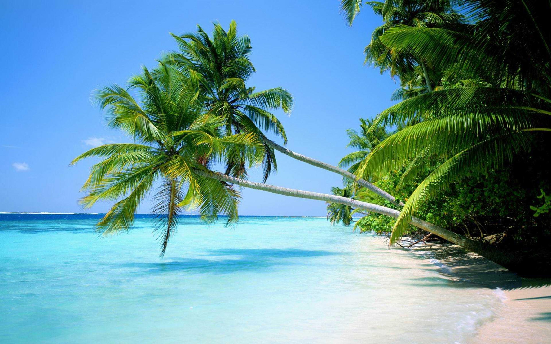 Tropical Beach Palm Trees Wallpaper 3808 Frenziacom 2880x1800