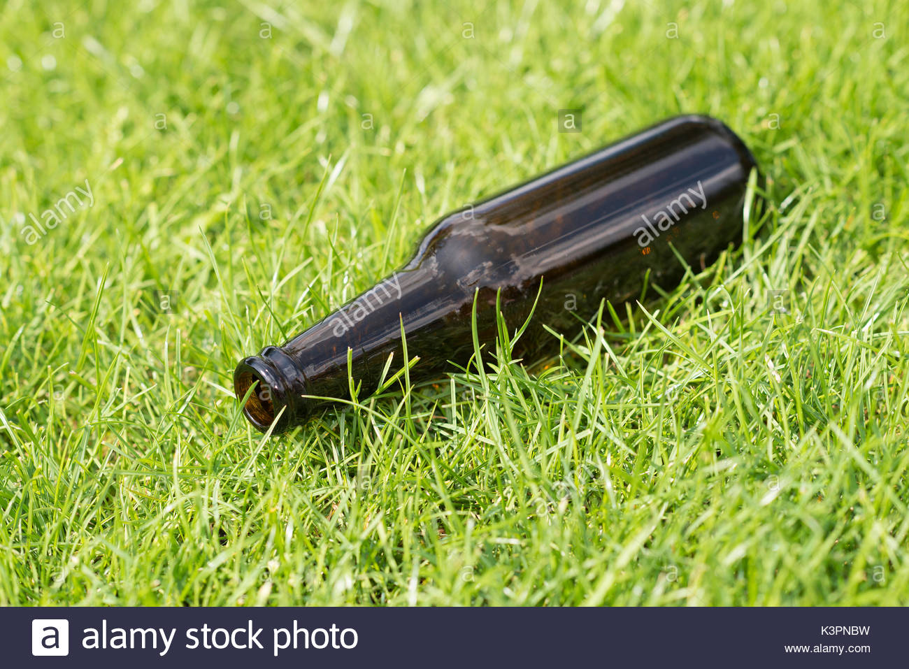Empty beer bottle in a grass field with a vague background Stock 1300x957
