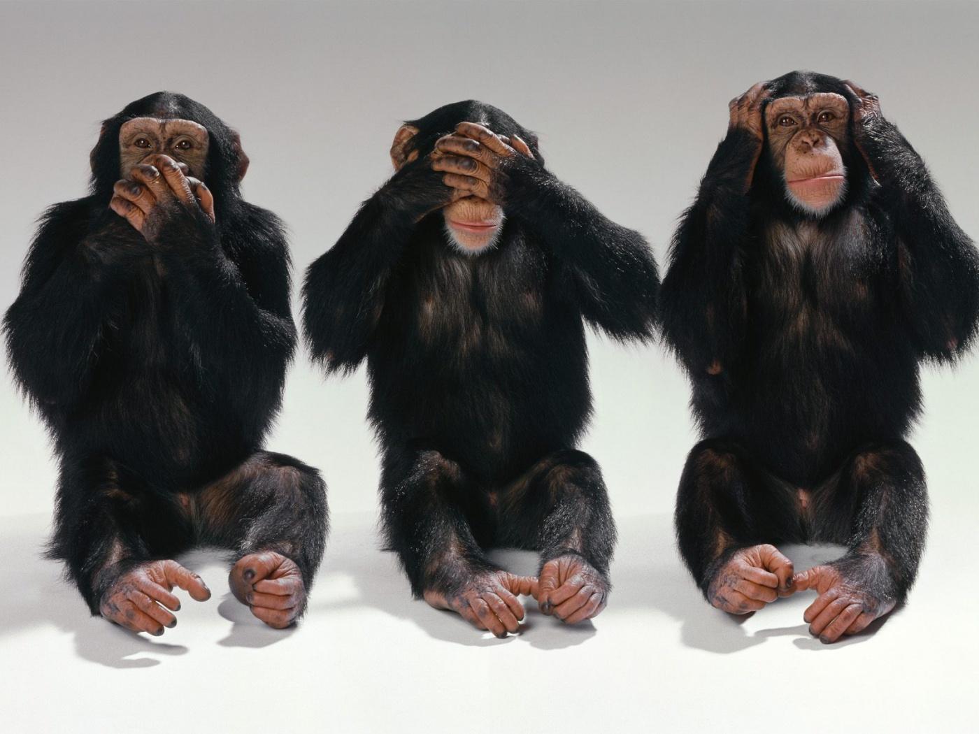 No Evil Hear No Evil Speak No Evil   Three Monkeys Photo wallpaper 1400x1050