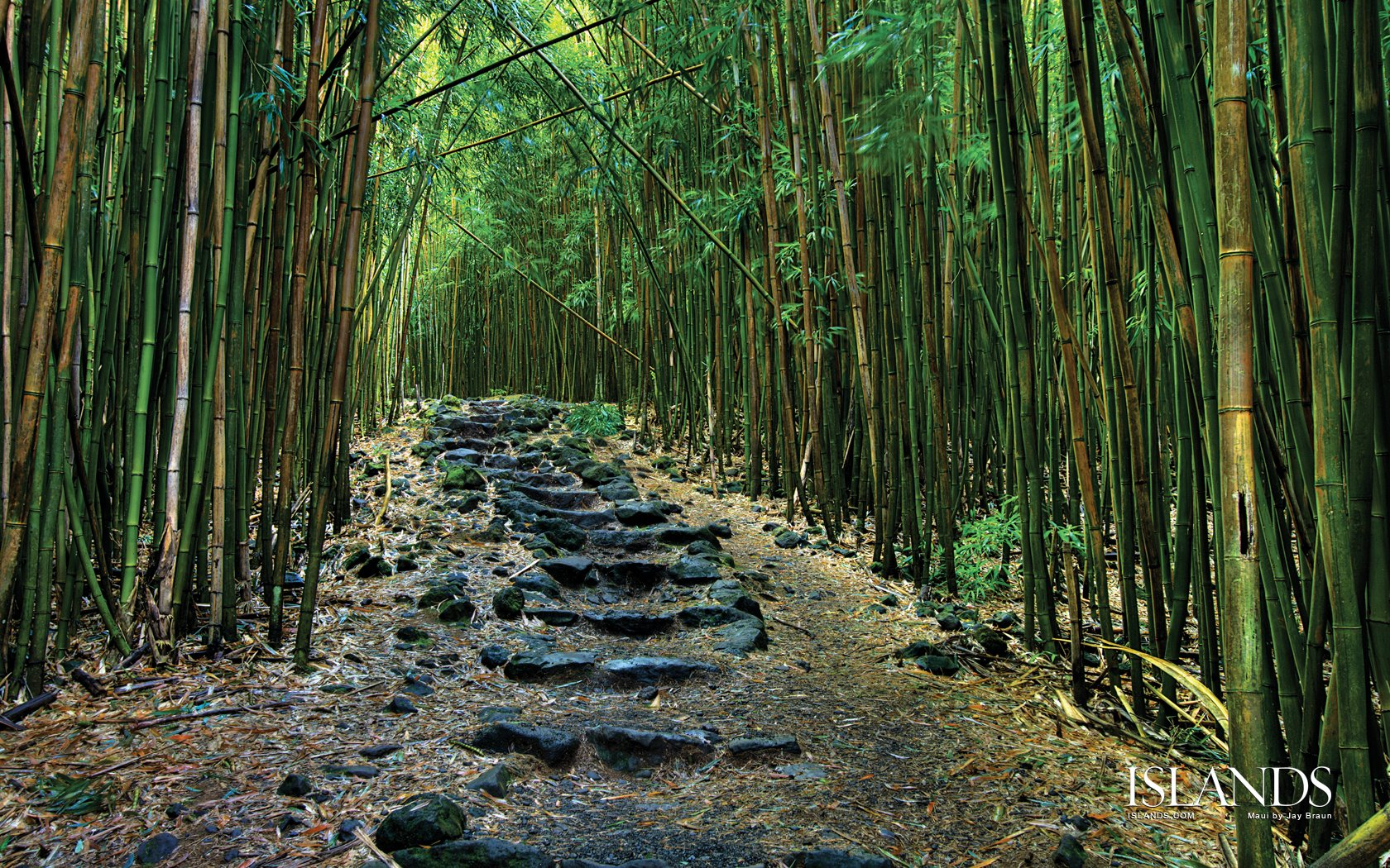 Bamboo Wallpaper Tropical - WallpaperSafari