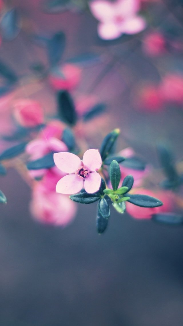 Four Petals Flower iPhone 5s Wallpaper Download iPhone Wallpapers 640x1136