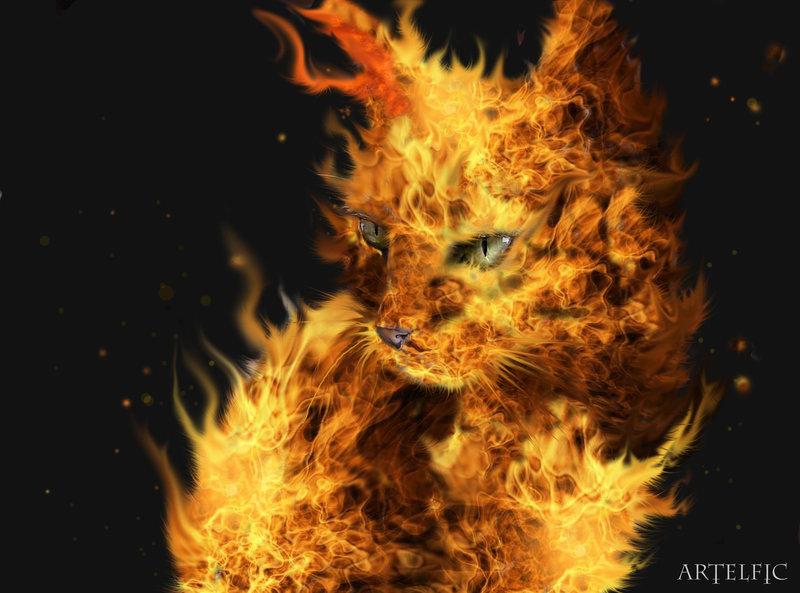 Fire cat by Artelfic 800x593