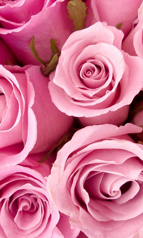 Roses Live Wallpapers Live wallpapers HD for Android software 480x800