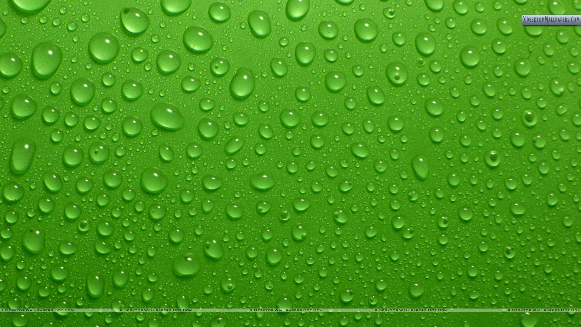 Drops On Green Background Wallpaper 1920x1080