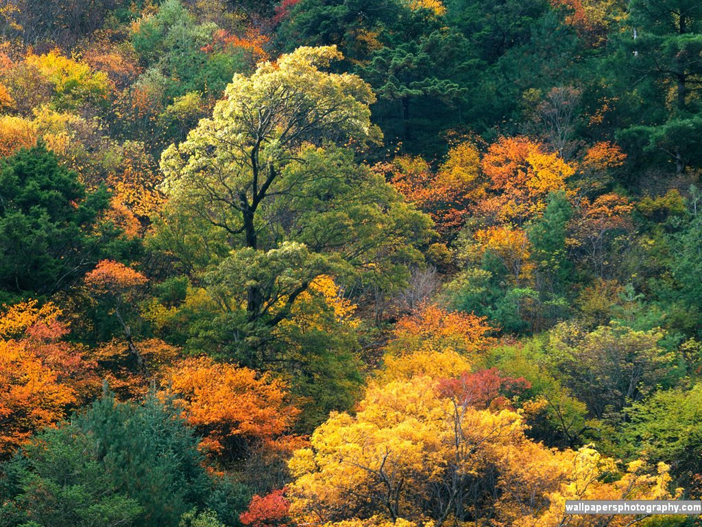 http://www.arts-wallpapers.com/wallpapersphotography-com/autumn_fall ...