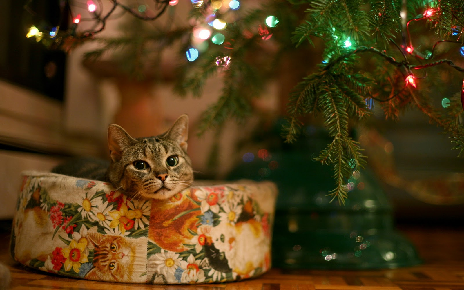 Collection Christmas Cat Christmas Decorations christmas wallpaper 1600x1000