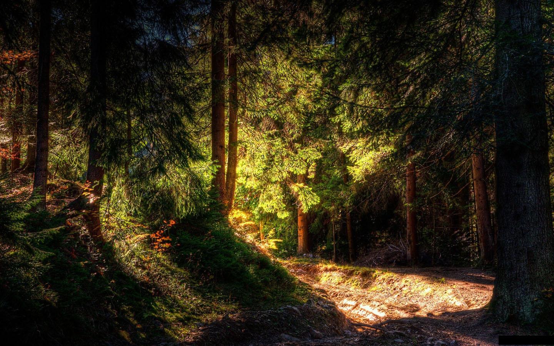 Green Forest Wallpaper Hd Sunrise 1440x900 pixel Popular HD 1440x900