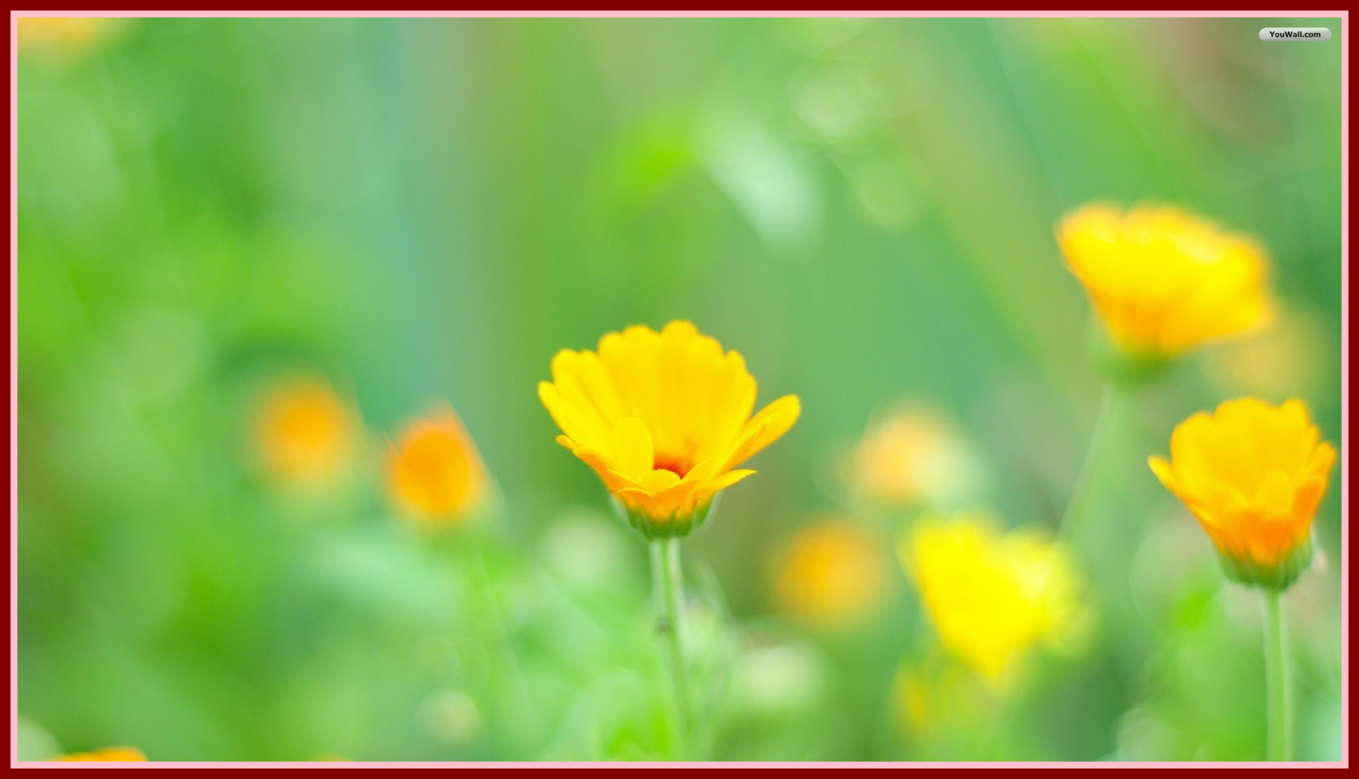 64 Yellow Flower Wallpapers on WallpaperPlay 1970x1130
