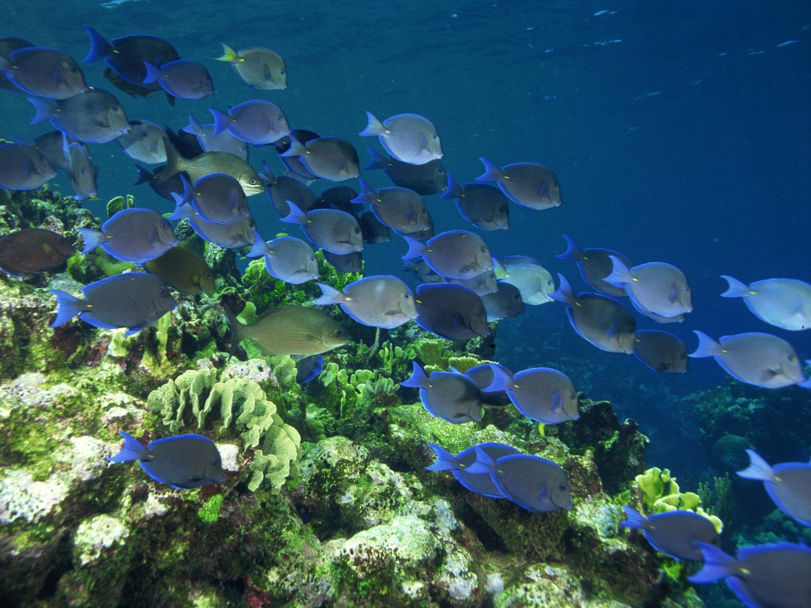 Colorful Coral Reef Fish wallpaper wallpaper hd background desktop 1600x1200