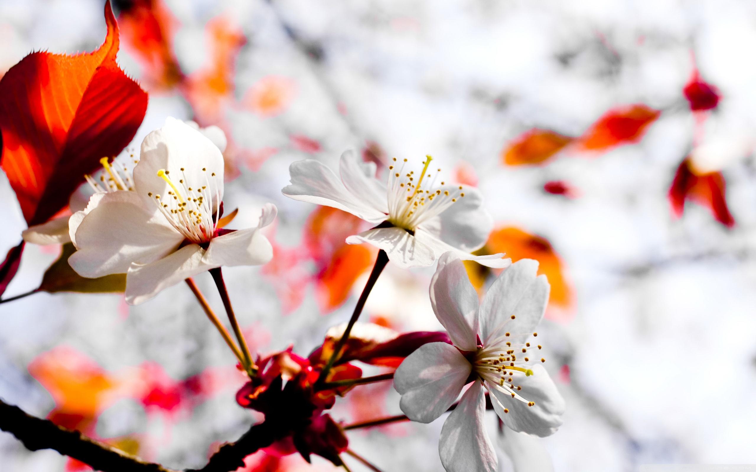 Spring Season Flowers Ultra HD Desktop Background Wallpaper for 4K 2560x1600