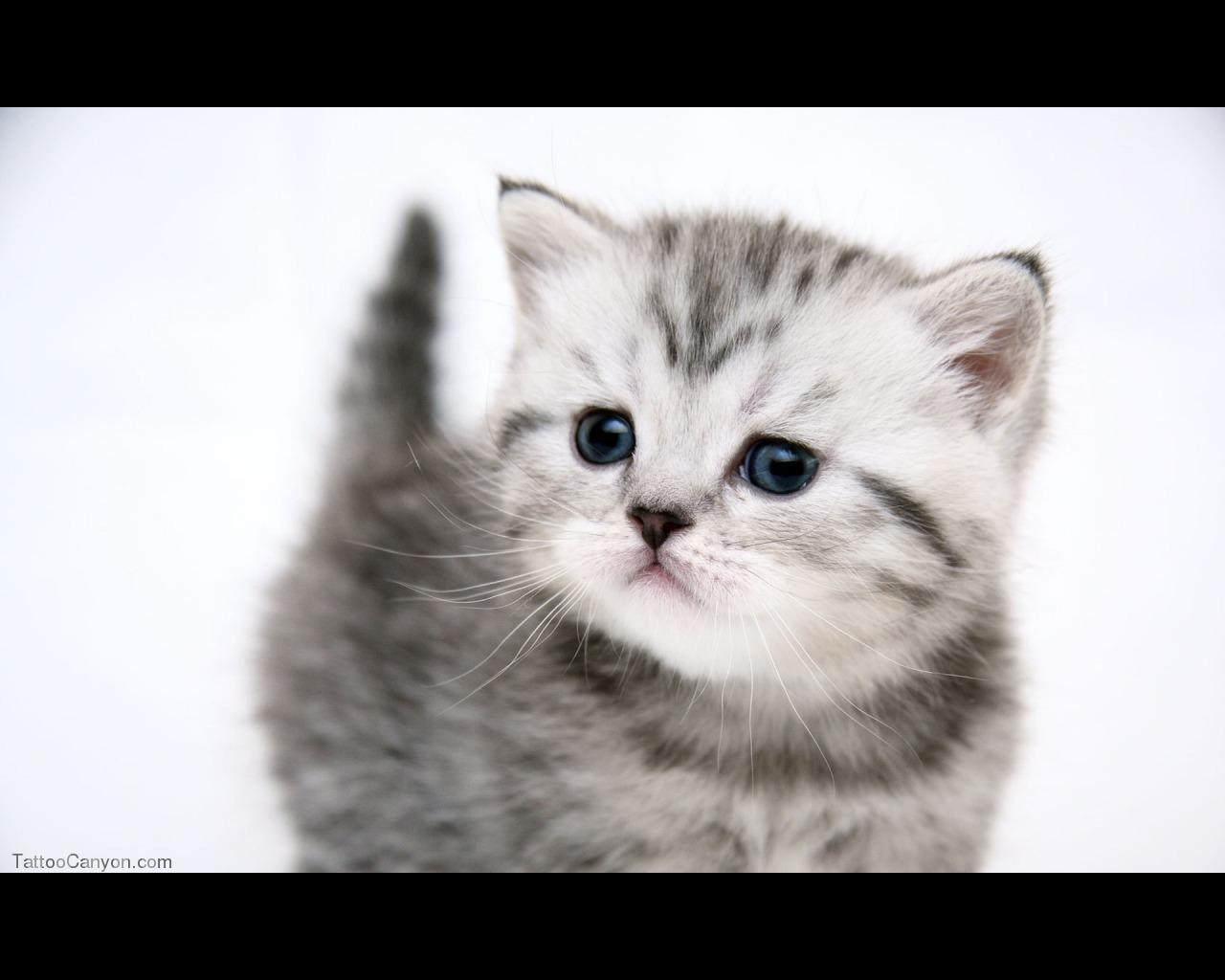 Very Funny Cat Photos 2 Desktop Wallpaper Wallpaper 1280x1024