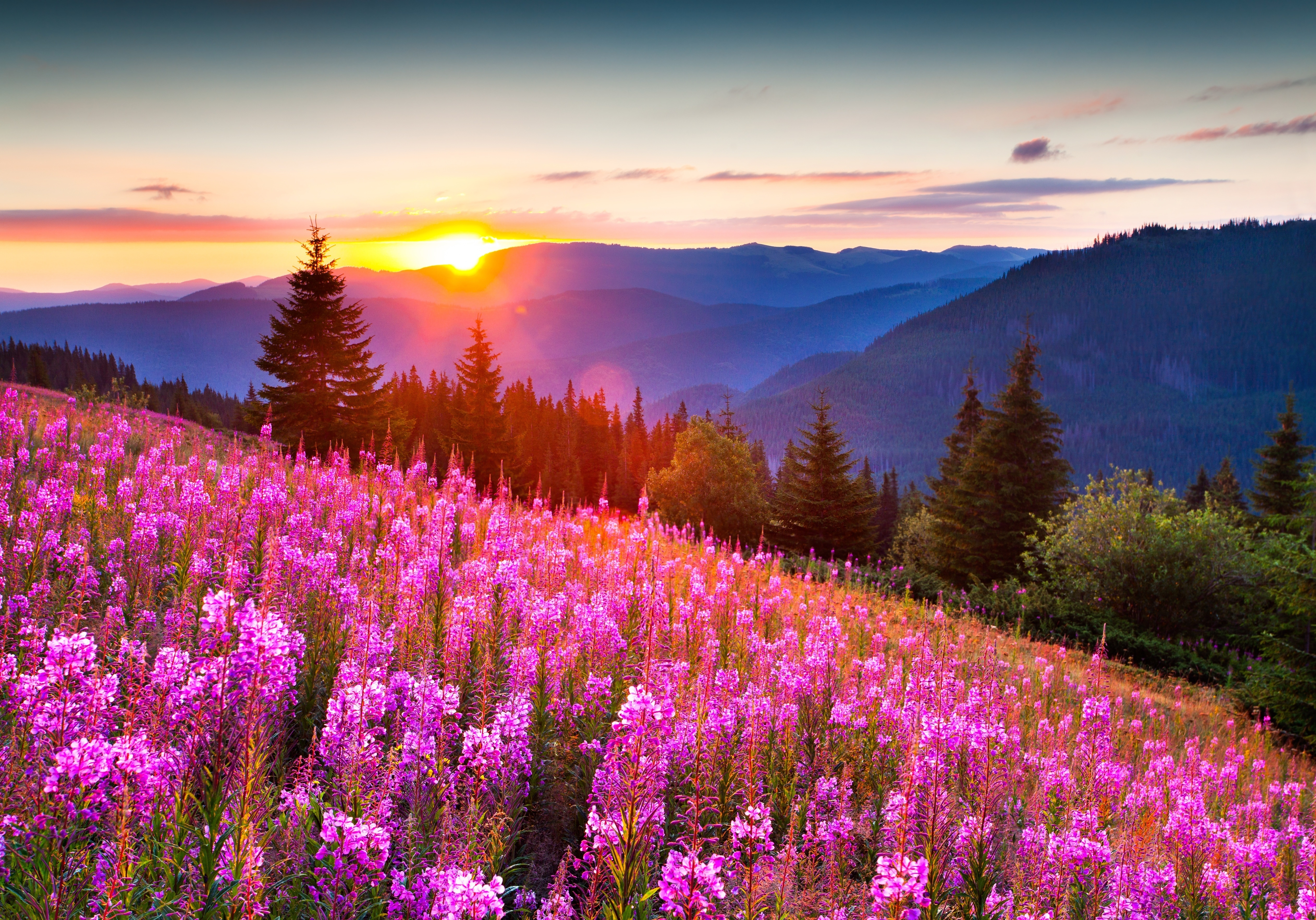 Wallpapers Nature Mountains Flowers Forests Scenery 5049x3532 5049x3532