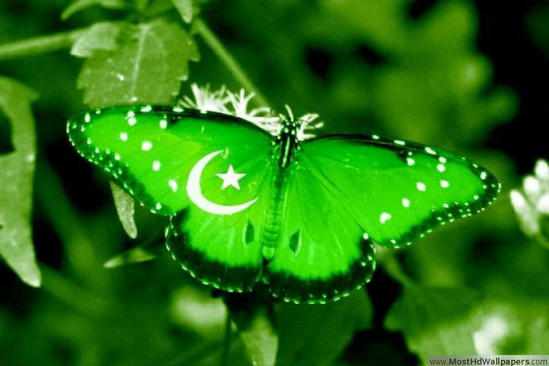14 August Pakistan Independence Day HD Wallpapers Most HD Wallpapers 800x534