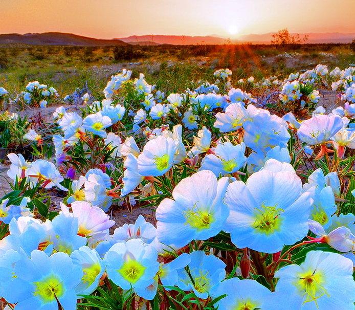 Desert spring wallpaper   ForWallpapercom 694x606