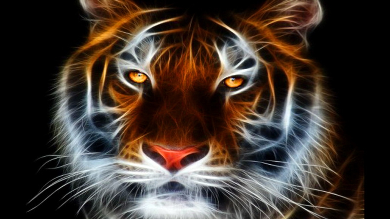 Tiger HD Wallpaper Animated HD Wallpaper Animation HQ Wallpaper 1280x720