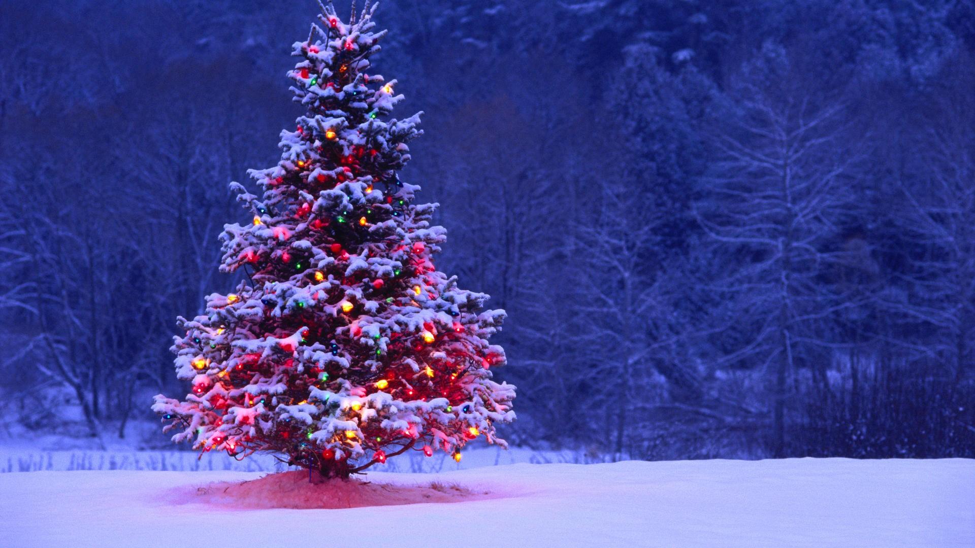 christmas tree hd wallpapers best desktop backgrounds widescreen 1920x1080