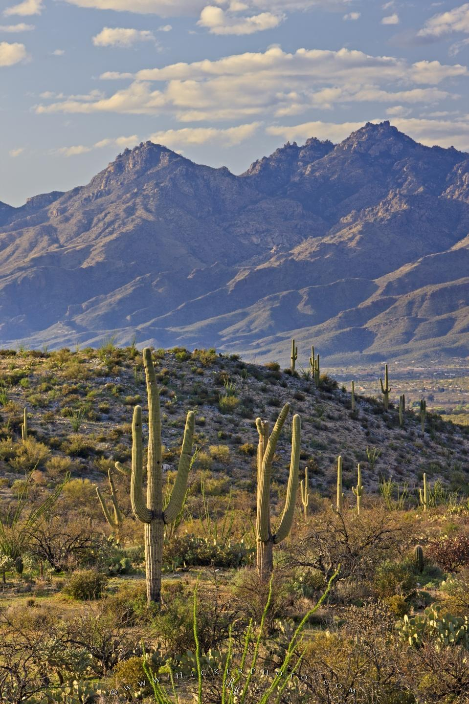 wallpaper background Mountain Landscape Saguaro National Park 959x1440