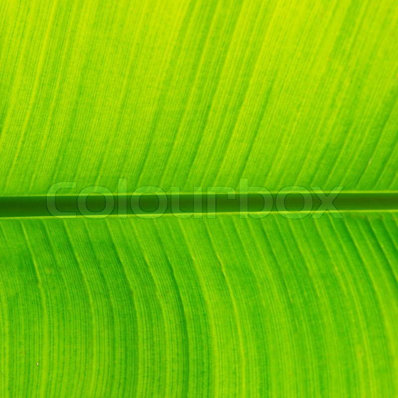 Pin Banana Leaves Wallpaper 7074 Open Walls 800x800