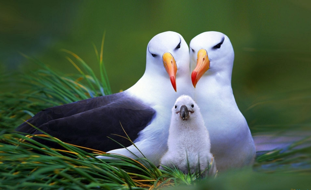 Animal Wallpaper Bird Image Photos Cute Bird Bird Pc Wallpaper 1080x660