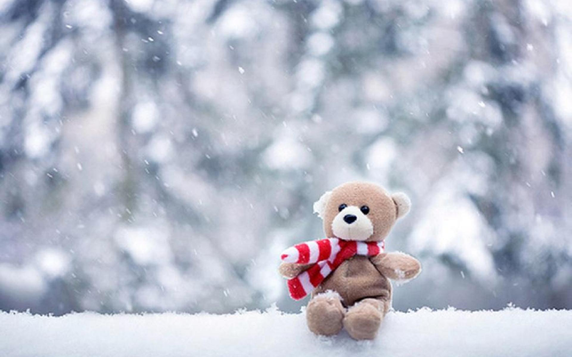 Winter Pic   Wallpaper High Definition High Quality 1920x1200