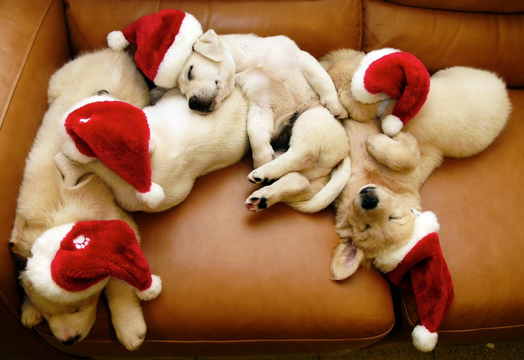 Cute Christmas Puppies and Dogs 1024x705
