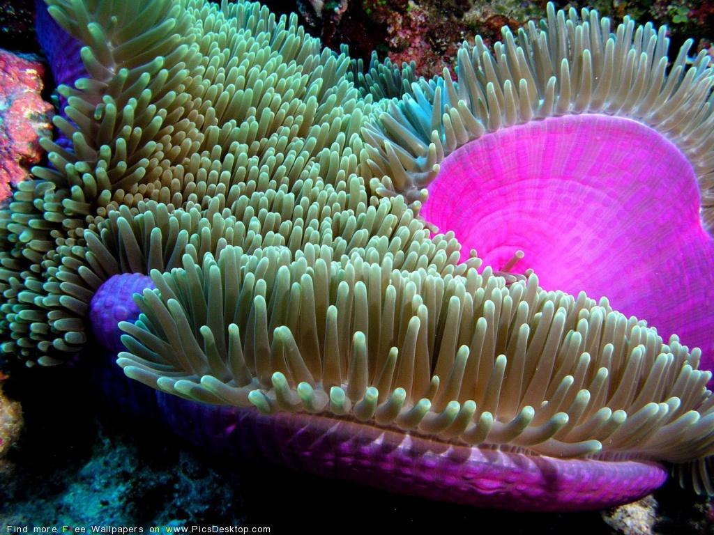 Ocean Life Desktop Backgrounds HD wallpaper background 1024x768