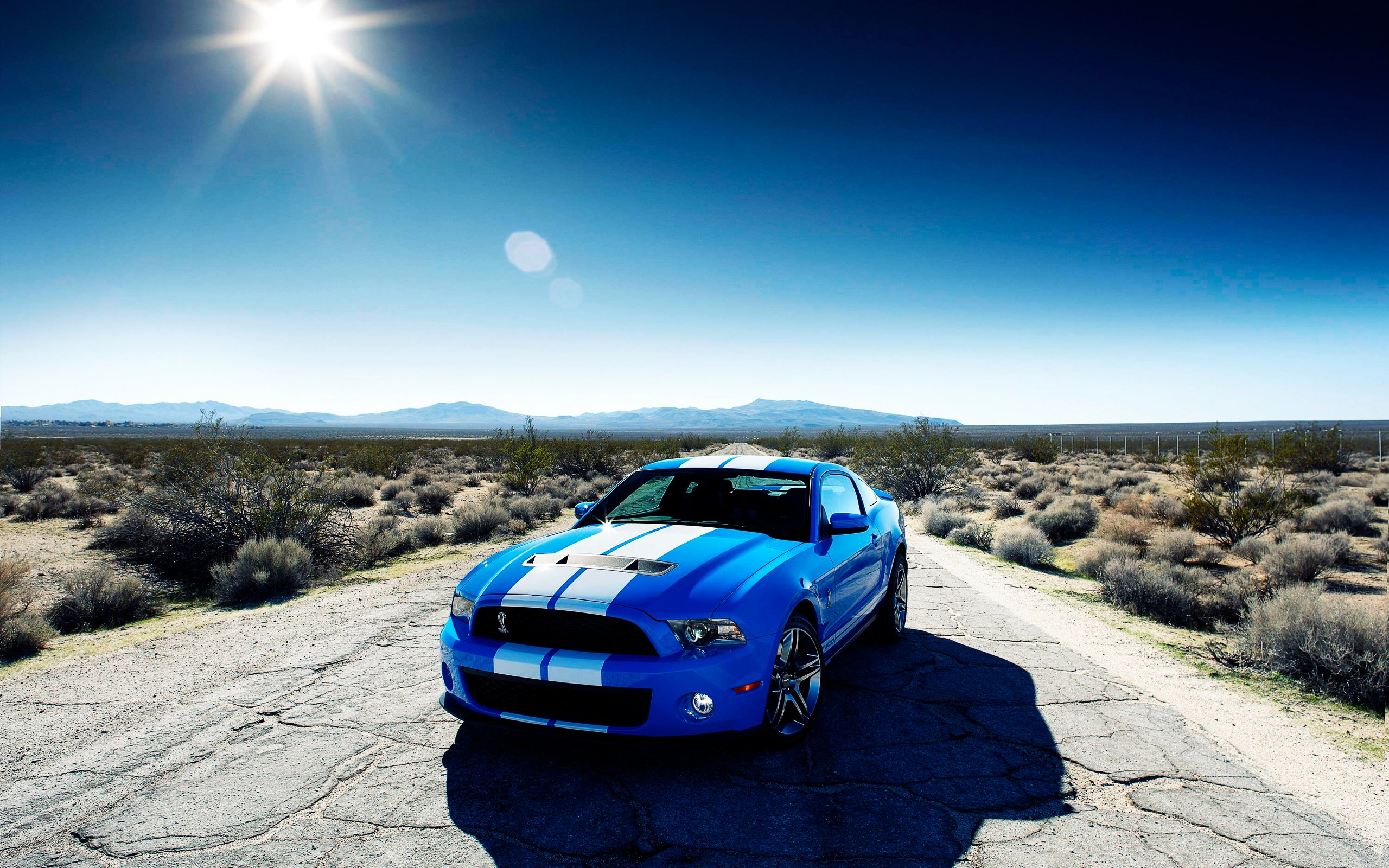 Hd wallpapers of cars - Ford Shelby Gt500 Car Wallpapers Hd Wallpapers
