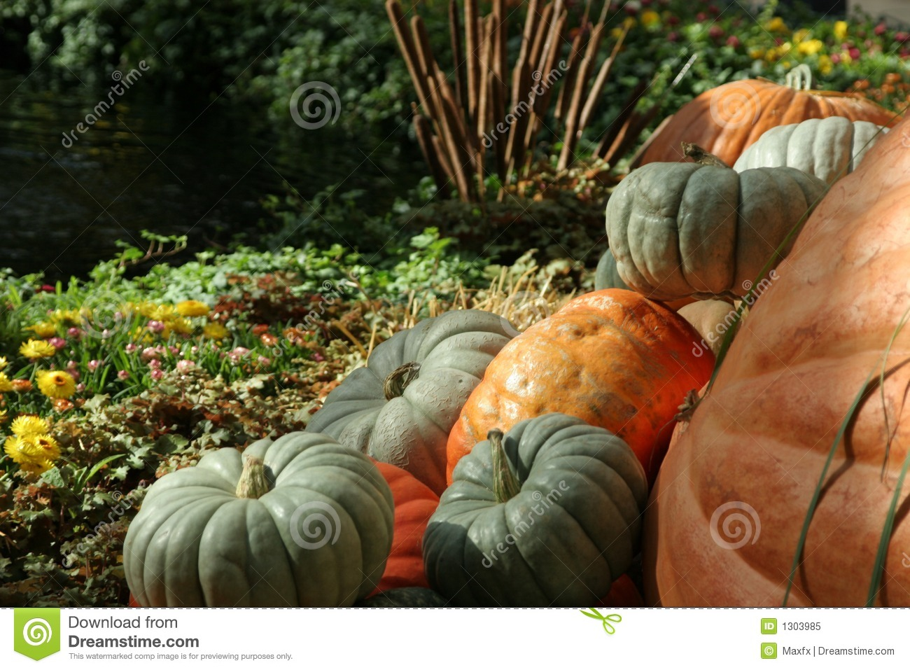 Pictures Of Fall Pumpkins Pumpkins and fall flowers 1300x957