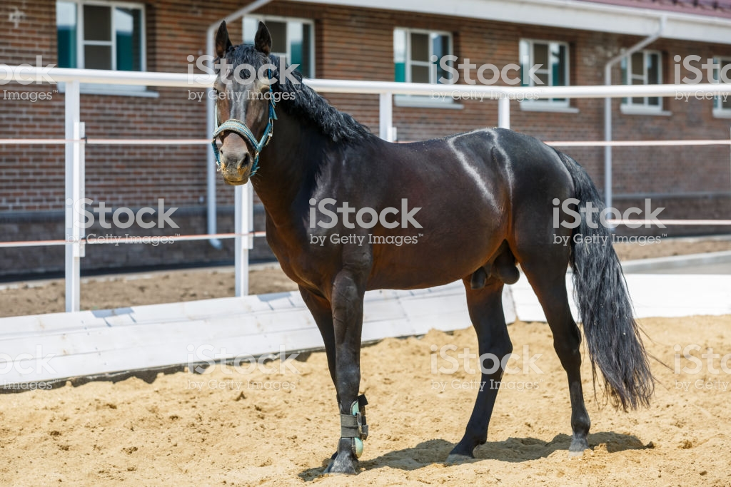 Black Horse Stands On Sand In A Separate Corral On The Background 1024x683