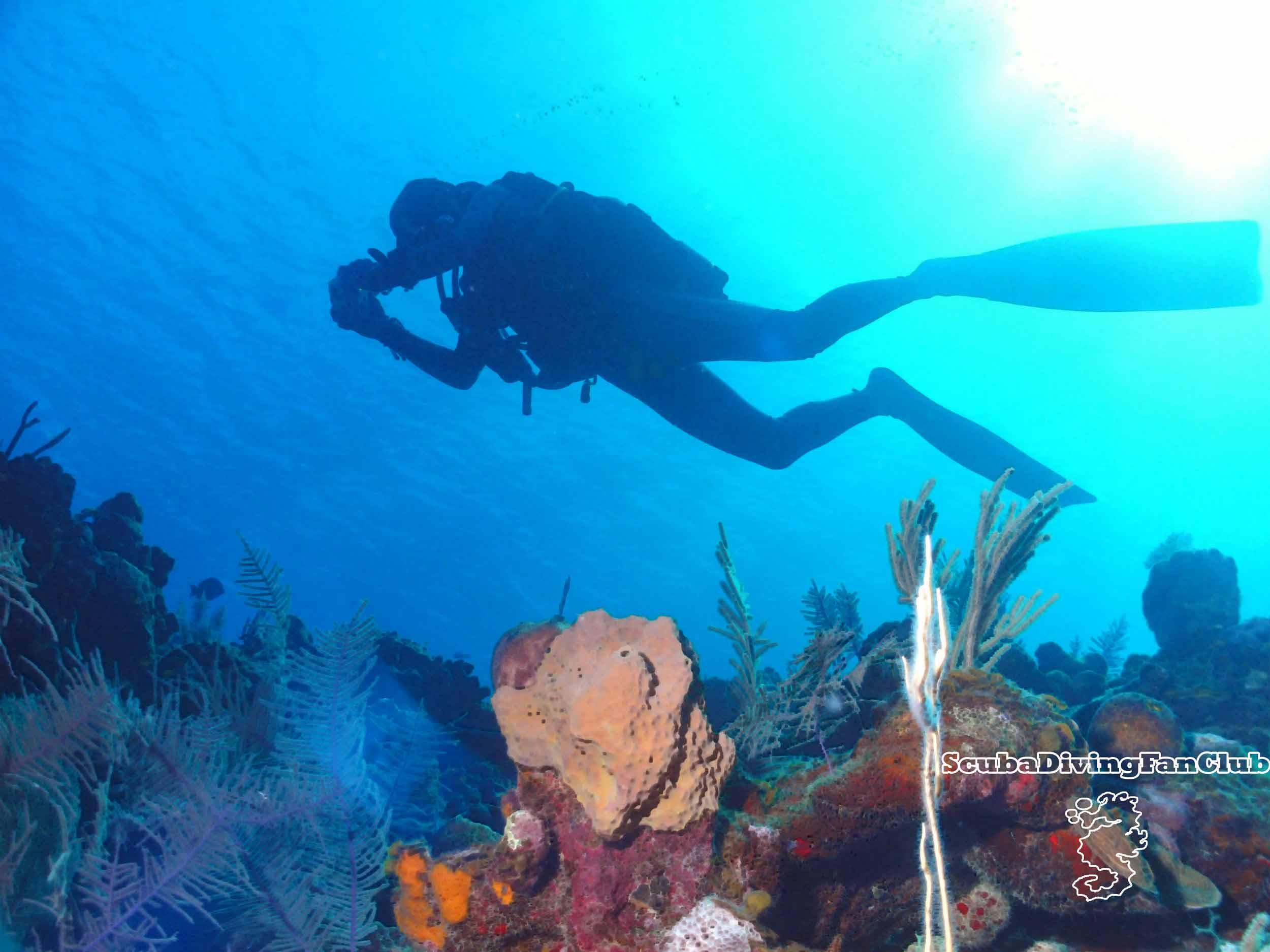 Scuba Diving Wallpaper  diving wallpapers 2500x1875