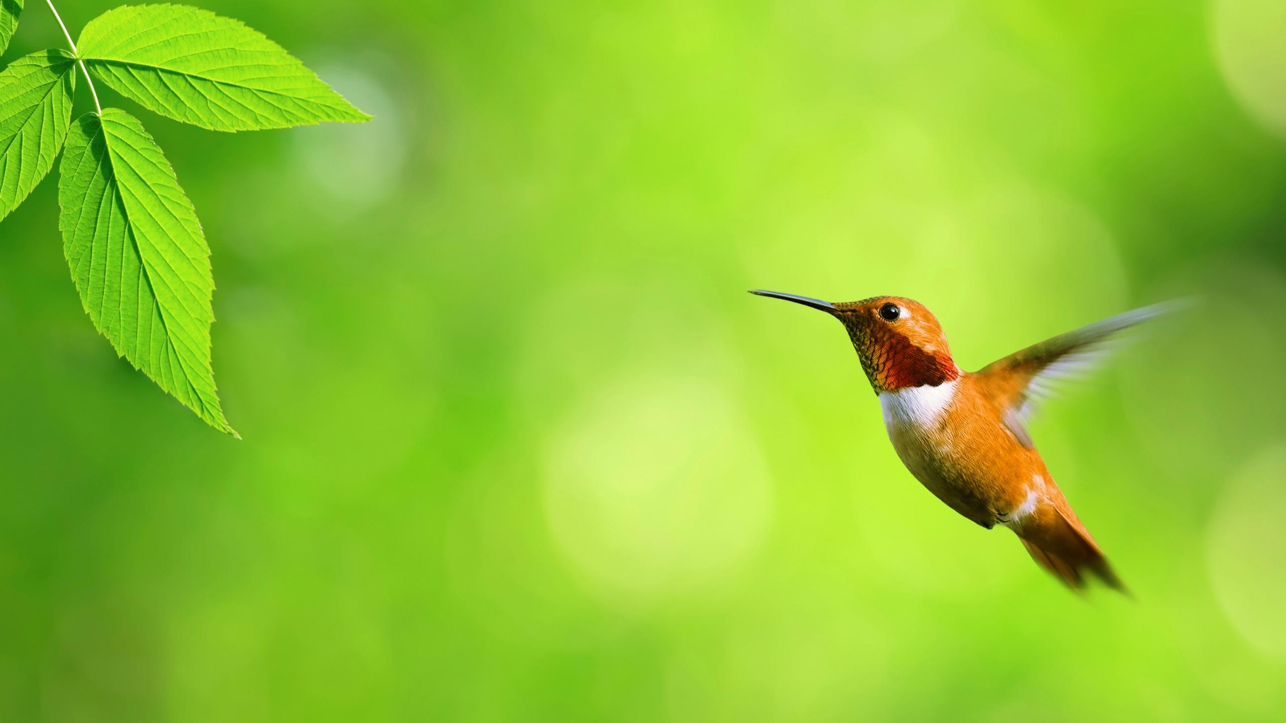 Hummingbird And Green Leaf Hd Wallpaper Wallpaper List 2560x1440