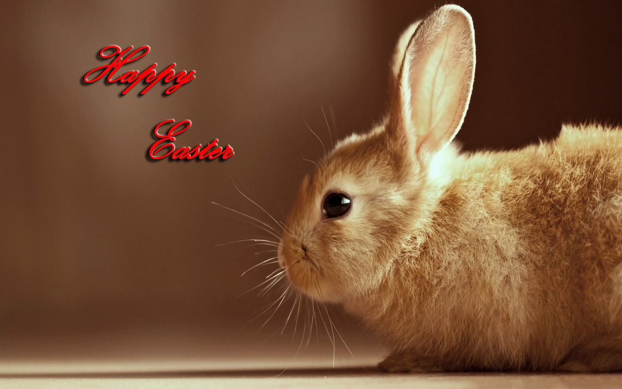 easter 2013 free hd wallpapers cute easter bunnies wallpapers 02jpg 1280x800