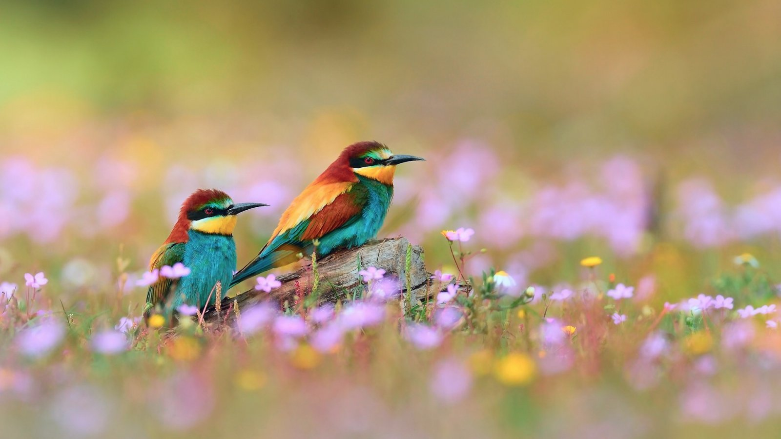 flowers for flower lovers Flowers and birds desktop wallpapers 1600x900
