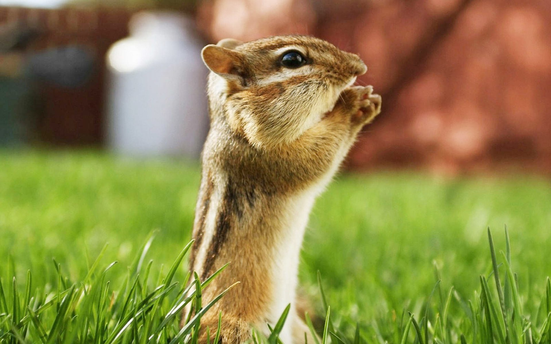 Funny animal wallpapers with words wallpapersafari - Funny animal wallpapers ...