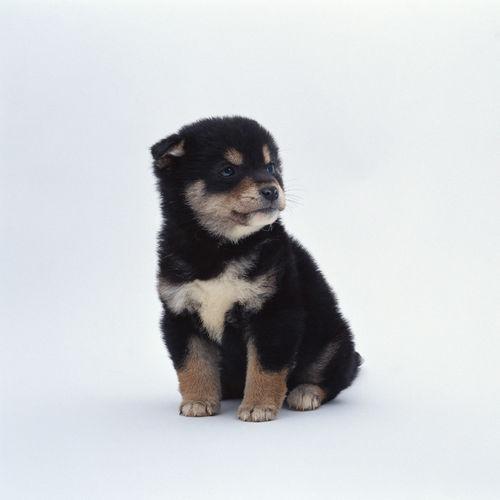 2560x1440 Puppy Frowns Wallpaper 500x500