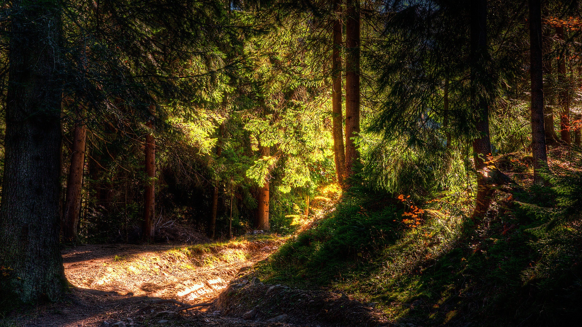 Full hd nature wallpaper nature hd wallpapers | ImgStocks.com