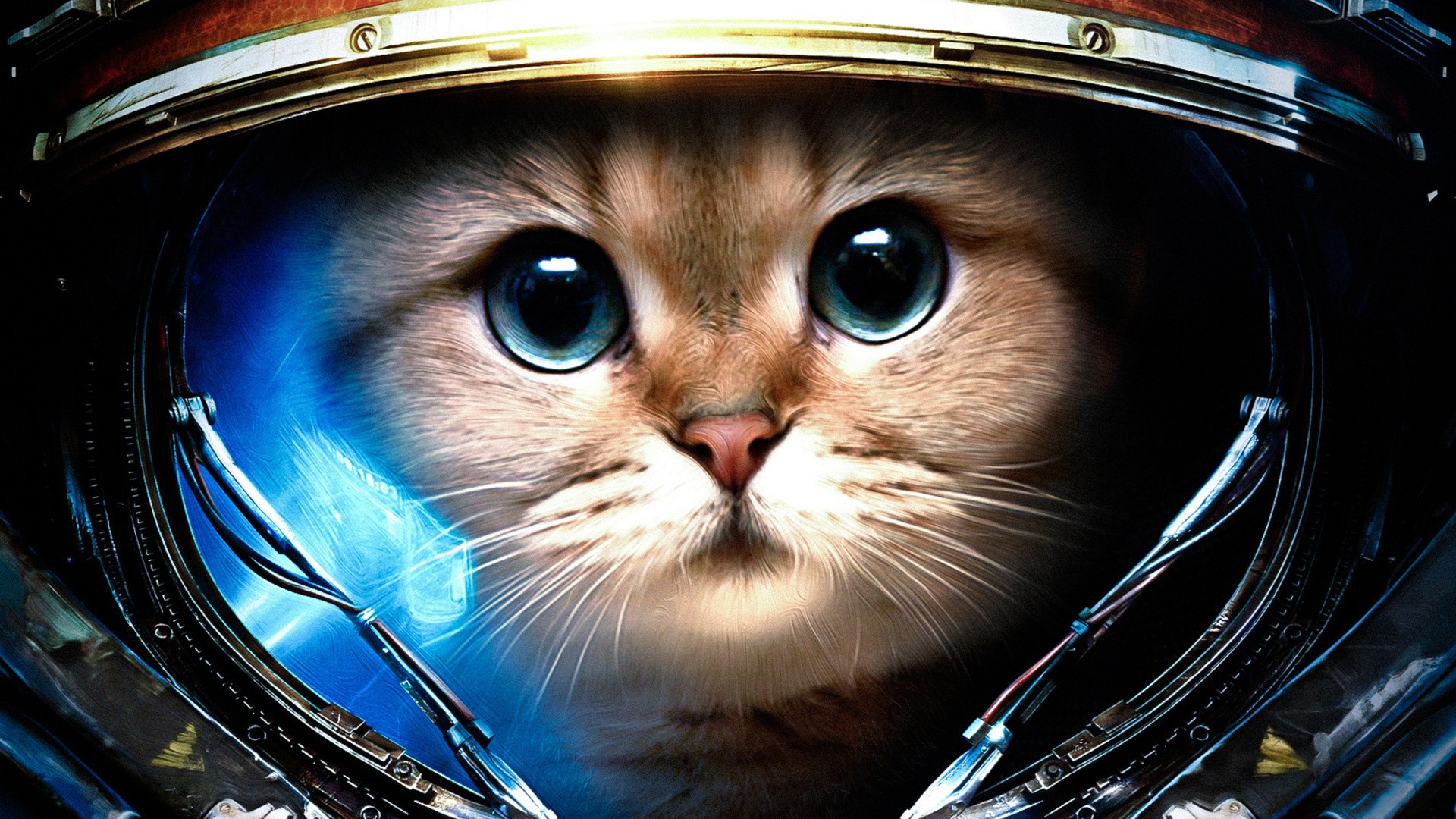 Kitty Cat Adorable Animals Spacecat Funny Cats Starcraft Ii Space 1920x1080