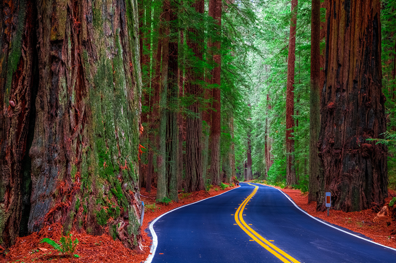 Images California USA Redwood State Park Nature Roads Forests Trees 1280x852