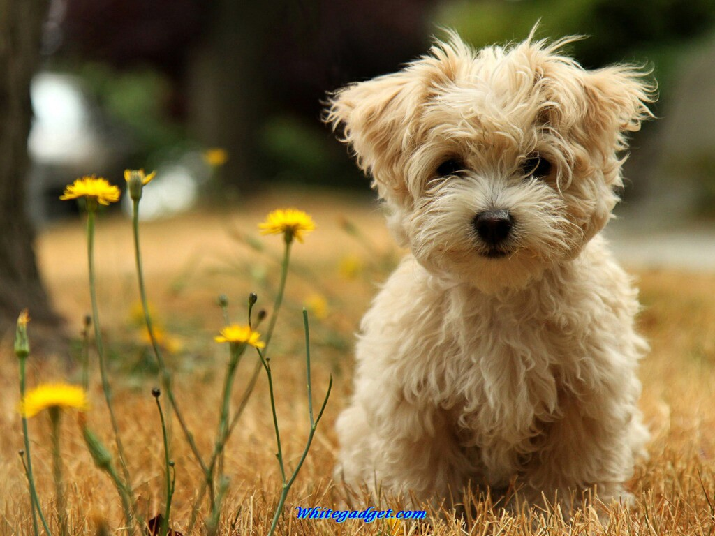 Yorkshire Terrier dog photo and wallpaper Beautiful Lovely Yorkshire 1024x768