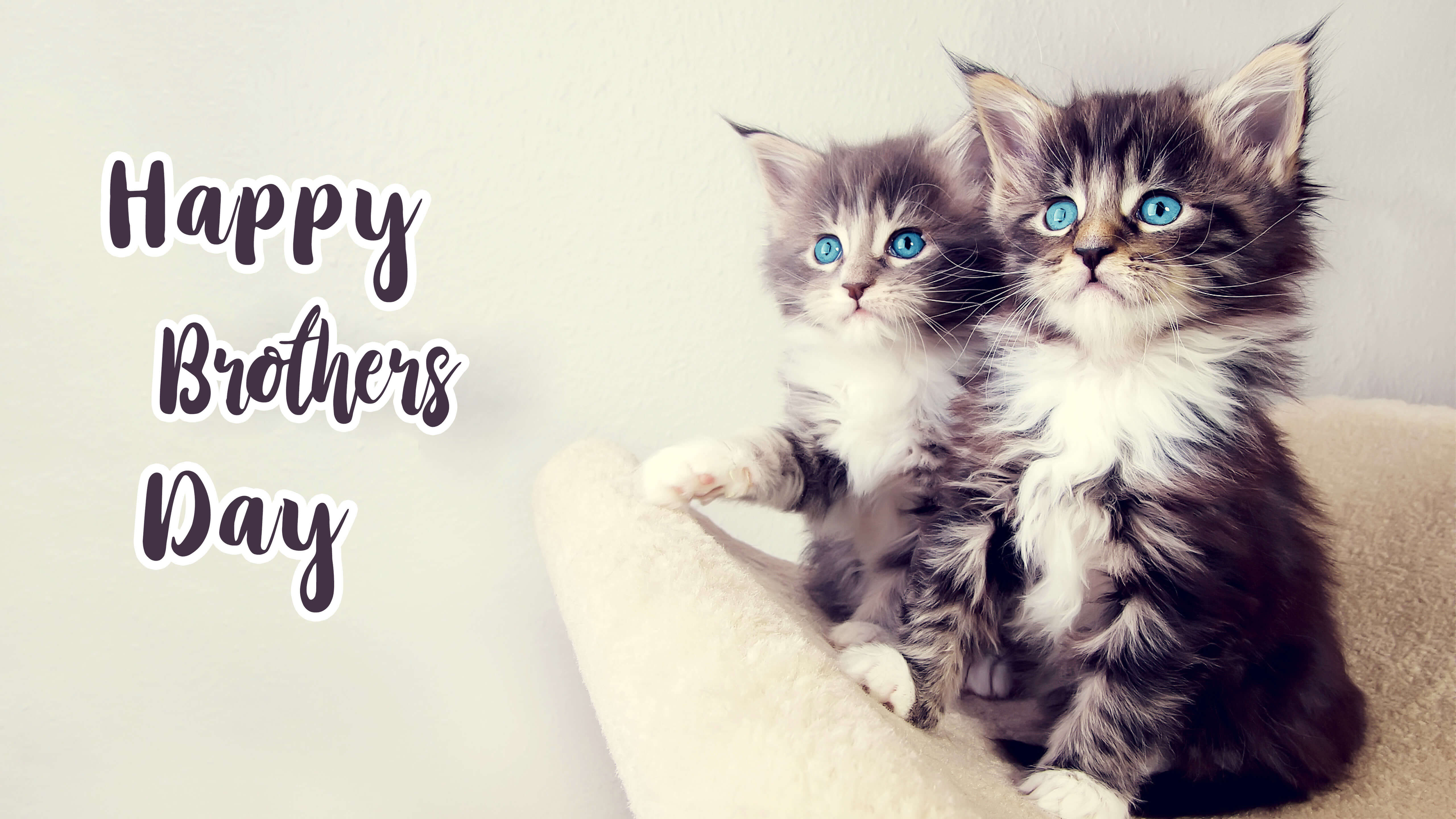 Happy Brothers Day Two Cute Kittens Cat Blue Eyes Hd Wallpaper 5120x2880