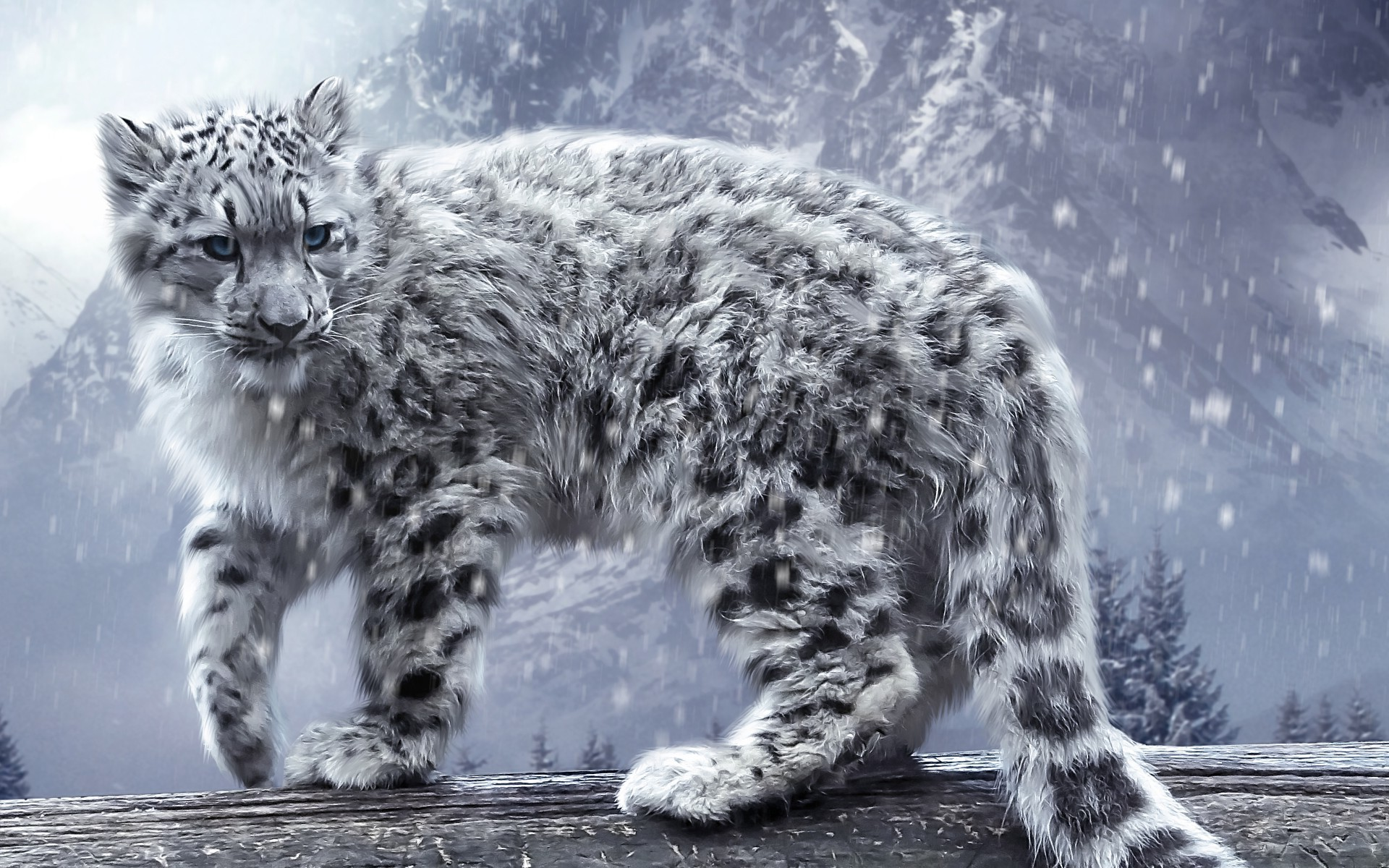 62 Snow Leopard Wallpapers On Wallpapersafari