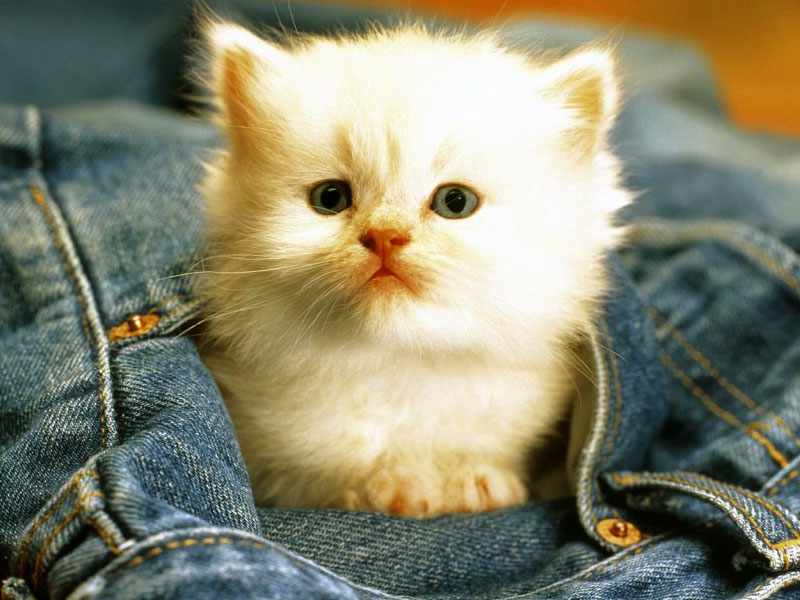 Wallpapers Download Funny Cats Wallpapers Download 800x600